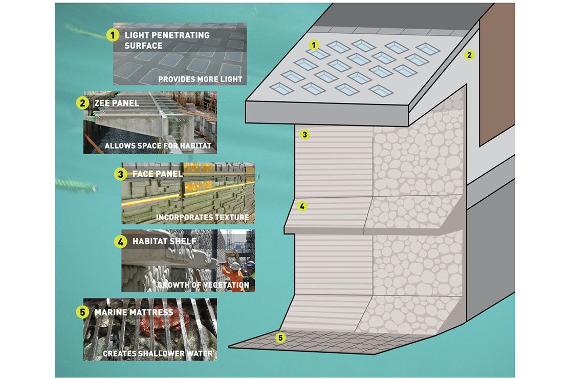 A diagram explains the seawall layers. From top to bottom there is a light penetrating surface, a zee panel that allows space for habitat, a face panel that incorporates texture, a habitat shelf that lets vegetation grow and a marine mattress that creates shallower water.