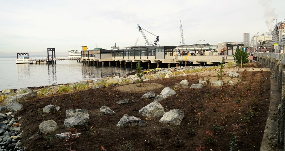 Photo of the habitat beach at Washington Street, with shows a rocky beach with rows of plants that are about ankle-high. Behind the beach, Colman Ferry Dock can be seen.