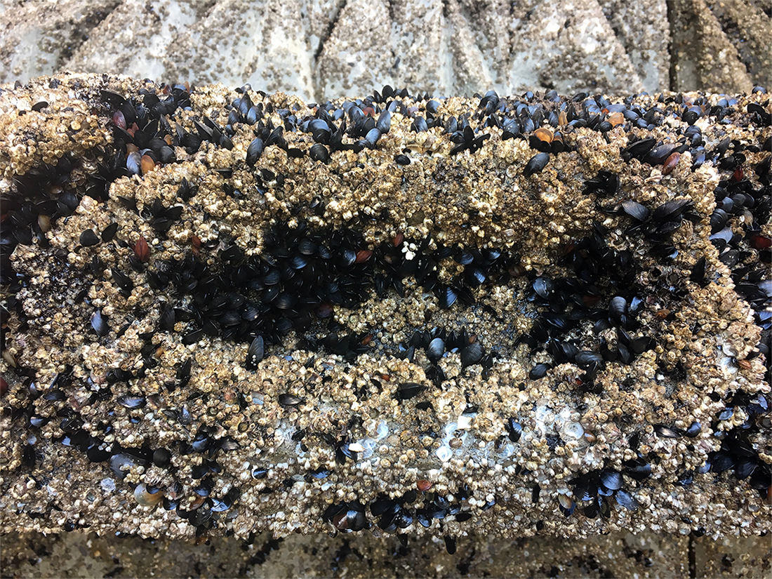 Mussels and barnacles are growing on the concrete texture, as intended.